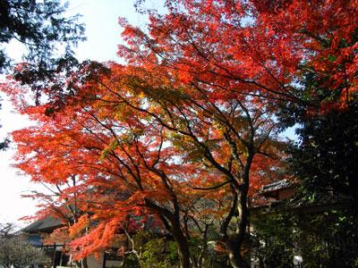 円覚寺の紅葉.jpg