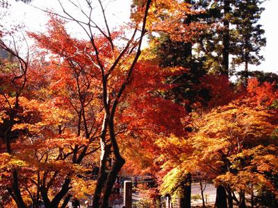 円覚寺前の紅葉.jpg