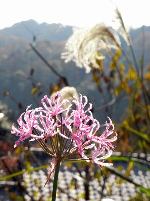 晩秋の花.jpg